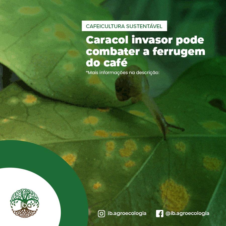 Mas, por agora vamos conferir mais informações sobre a possível utilidade dos caracóis no combate da ferrugem.